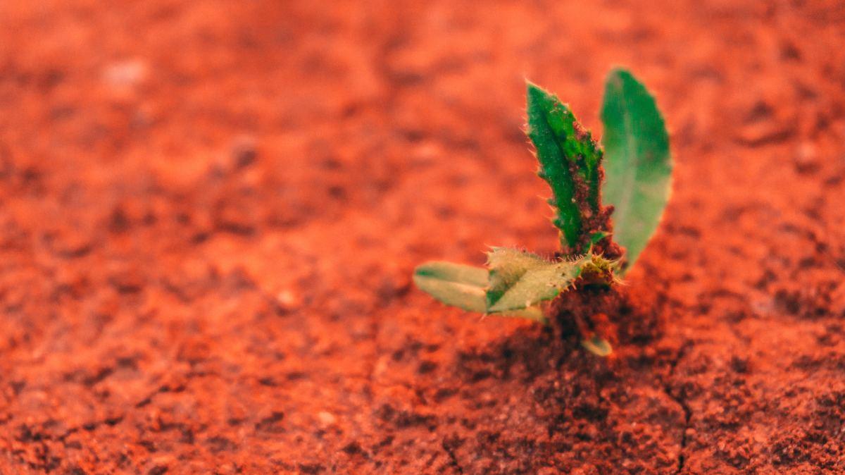 Mars crops 3
